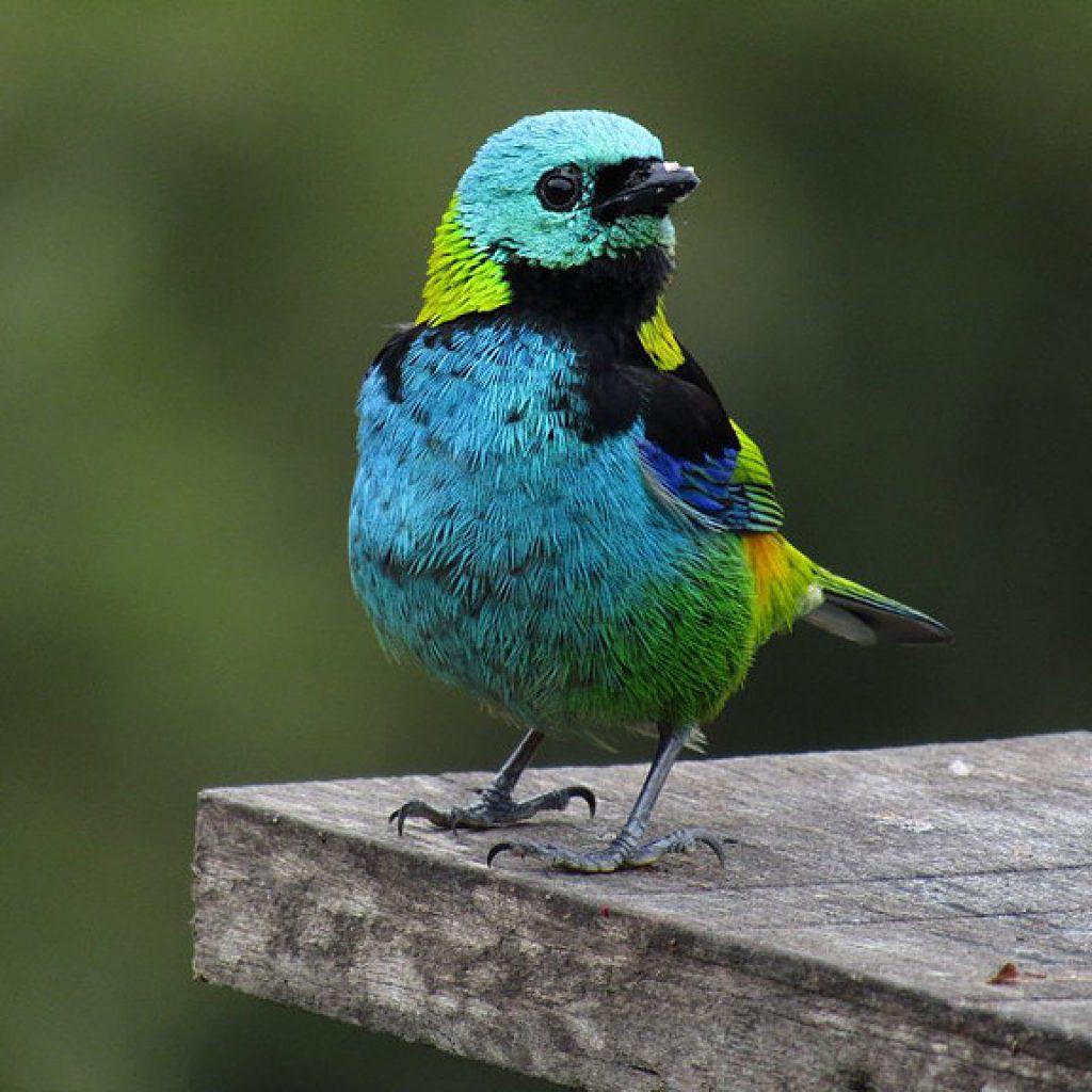 Aves do Legado