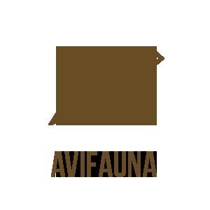 Avifauna